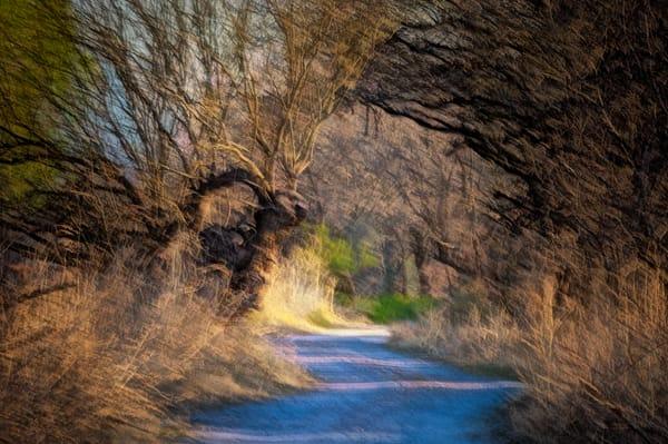 A Walk In The Bosque Photography Art | Carol Brooks Parker Fine Art Photography