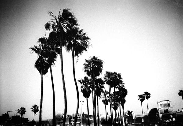 Venice Beach Palms Photography Art | gary giles photographs