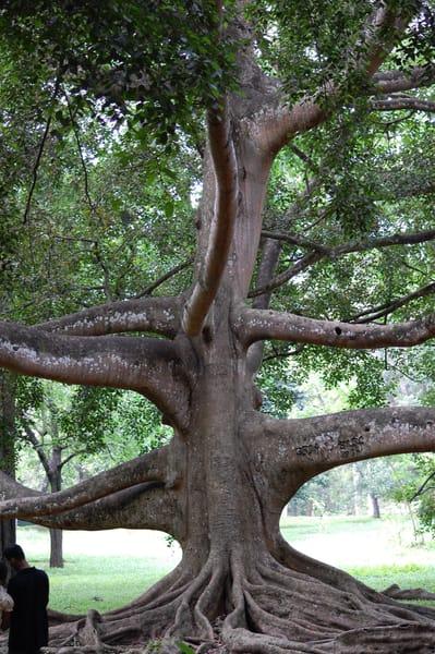 Trees - SL - Botanical Gardens