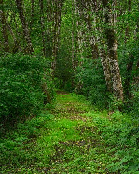 Summer, Preachers Slough Trail, Washington, 2020