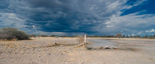 Savuti Gathering Storm Photography Art | Tolowa Gallery