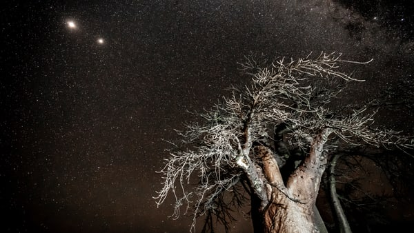 Seek Shade From The Stars Photography Art   Tolowa Gallery