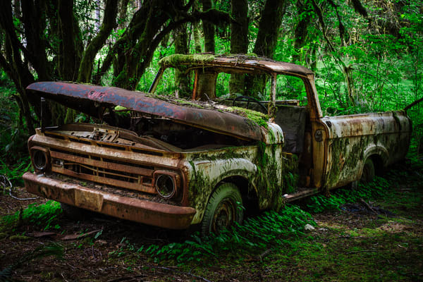 Rust in Peace No. 1, Olympic National Forest, Washington, 2016
