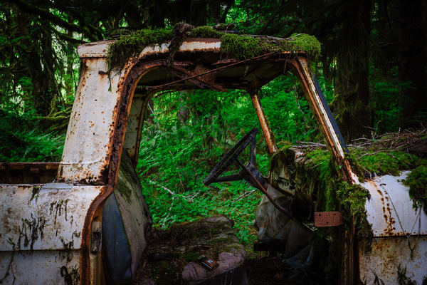 Rust in Peace No. 3, Olympic National Forest, Washington, 2016
