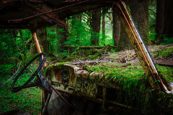 Rust in Peace No. 4, Olympic National Forest, Washington, 2016