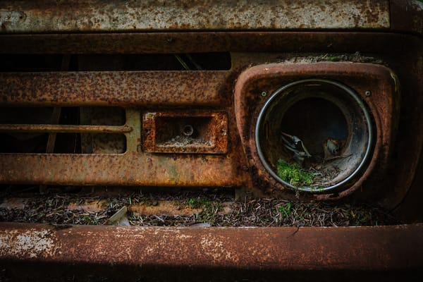 Rust in Peace No. 2, Olympic National Forest, Washington, 2016
