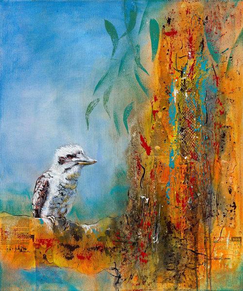 Kookaburra Sits