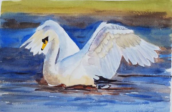 Carolyn Fuller - original artwork - nature - animals - birds - White Swan