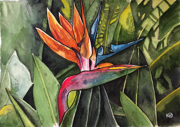 Bird Of Paradise  Art | Water+Ink Studios