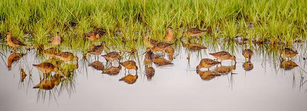 Sengekontacket Sanderling Panorama Art | Michael Blanchard Inspirational Photography - Crossroads Gallery
