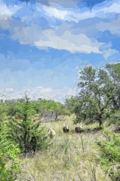 Three Cows, Posing for the Camera, Impasto Color
