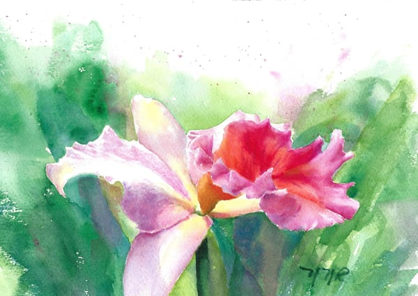 #9 Daily, Cattleya Candy Art | Nancy Reyna Fine Art
