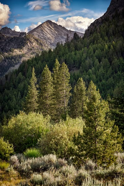 In The Pioneer Mountains | Shop Photography by Rick Berk
