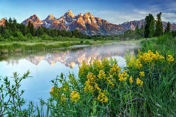 Teton Wildflowers | Shop Photography by Rick Berk