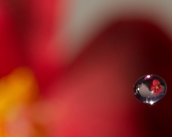 Reflection In A Drop Photography Art | It's Your World - Enjoy!