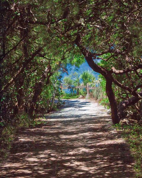 Shady Path Photography Art | It's Your World - Enjoy!