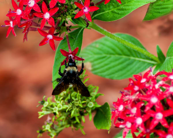 Worker Bee Photography Art   It's Your World - Enjoy!