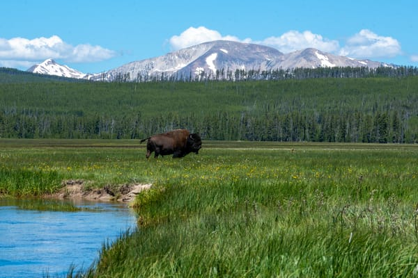 American Bison On The Prairie Photography Art | Christopher Scott Photography