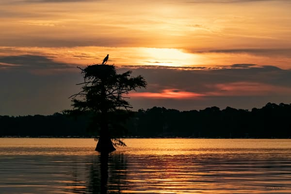 Sunrise At Reelfoot Lake With Osprey  9177  Art | Koral Martin Fine Art Photography