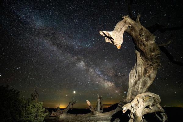 Milky Way Through Lightning Struck Tree Photography Art | Christopher Scott Photography