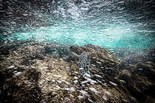 Current Photography Art | Art Sea Love
