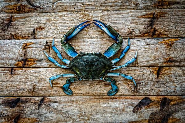 Topsail Island Crab