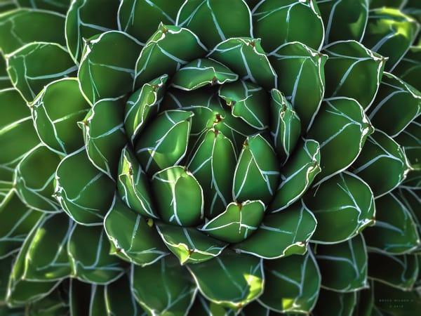Armored Chlorophyll