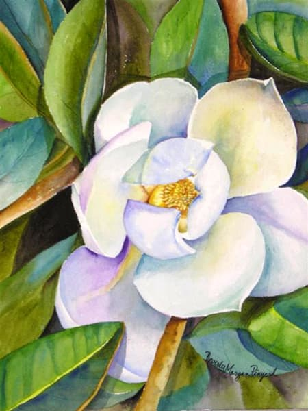 Magnolia up Close, From an Original Watercolor Painting