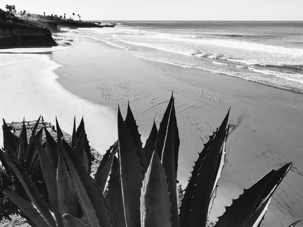 Agave Over The Baja California Coast Photography Art | Christopher Scott Photography