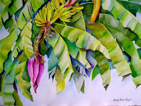 Banana Tree, From an Original Watercolor Painting