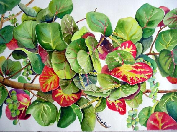 Fall Sea Grapes, From an Original Watercolor Painting