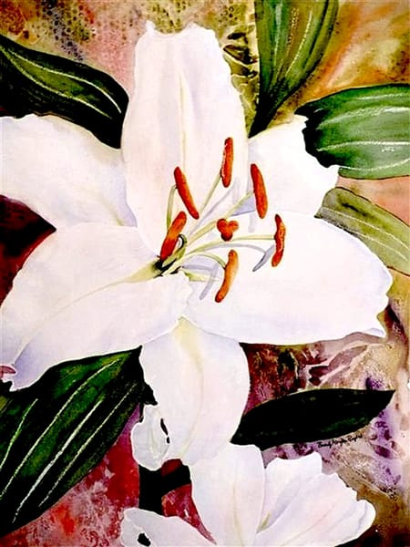 White Beauty, From an Original Watercolor Painting