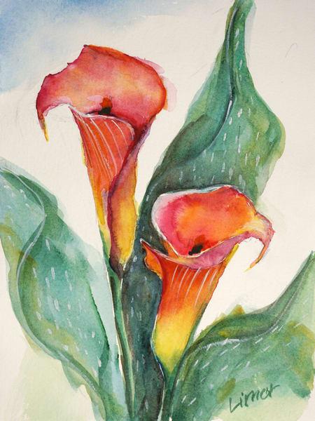 Calla Lily Art   Limor Dekel Fine Art
