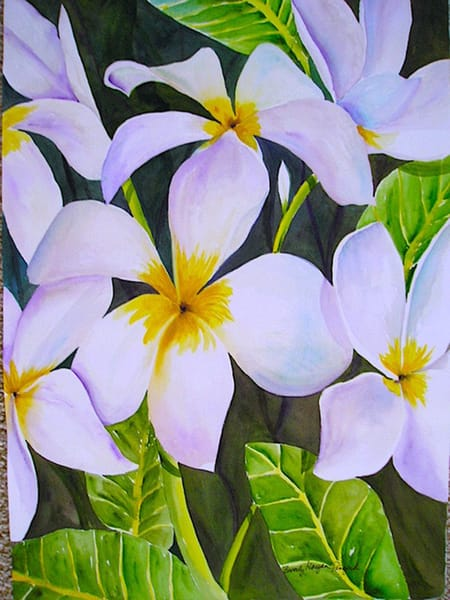 Plumeria, From an Original Watercolor Painting