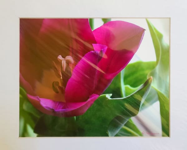Tulip On Left | An Artist's View Photography