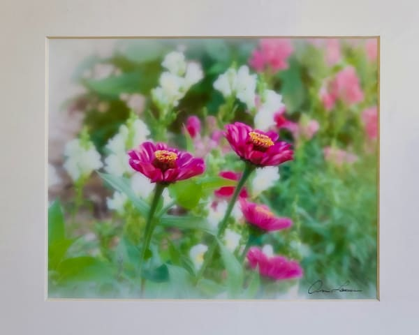 Painted Zinnias | An Artist's View Photography