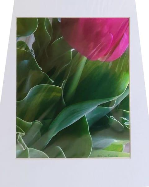 Tulip Bottom | An Artist's View Photography