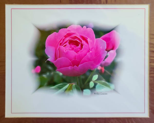 Pink Rose | An Artist's View Photography