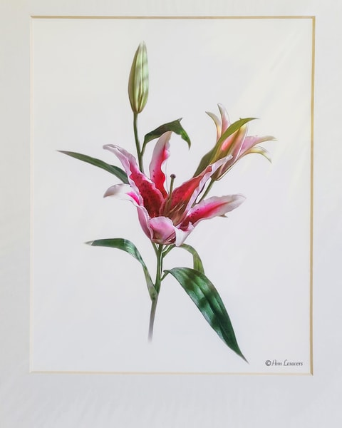 Lily | An Artist's View Photography