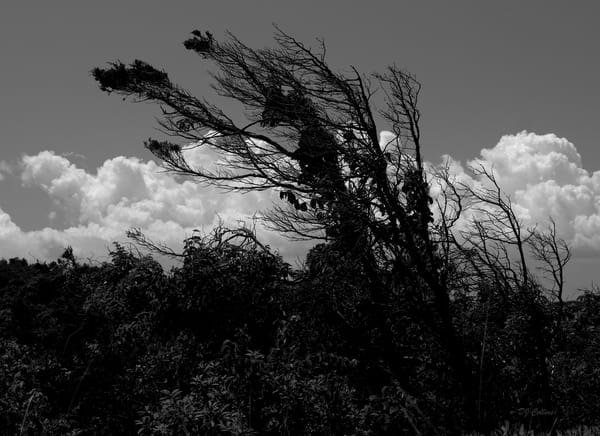 Bending Trees From Wind, 2020 Art | East End Arts