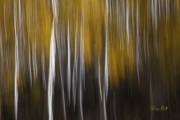 Impressionist Aspen 1  Art | Sharon Beth