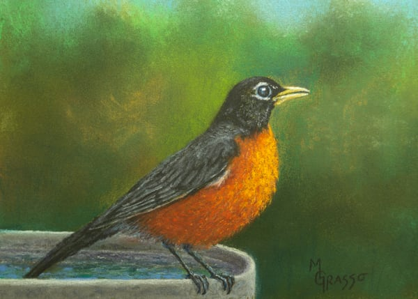 Robin   After A Bath Art | Mark Grasso Fine Art