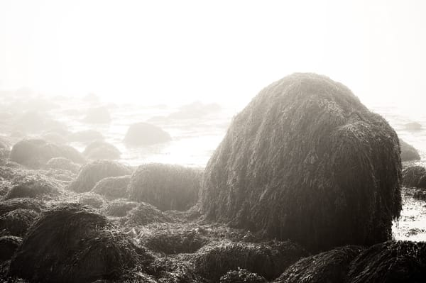 Maine Tidal Study Iv Photography Art | Roman Coia Photographer