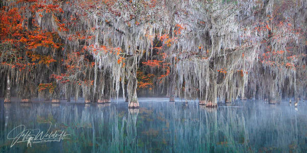 Cypress Trees of Northwest Florida - Southern Dreams  Fine Art Prints on Canvas, Paper, Metal, & More by Waldorff Photography