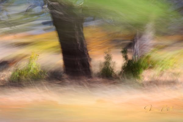 Impressionist Wind In The Trees  Art | Sharon Beth