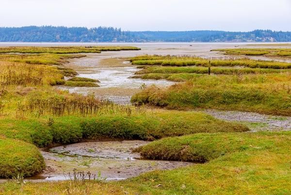 Puget Sound Tide Flats, Nisqually National Wildlife Area, Washington, 2007