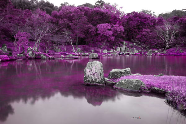 Zen Garden, Japan, Lake, Purple