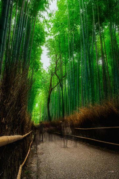 Arashiyama Ghosts  Photography Art   Matej Silecky