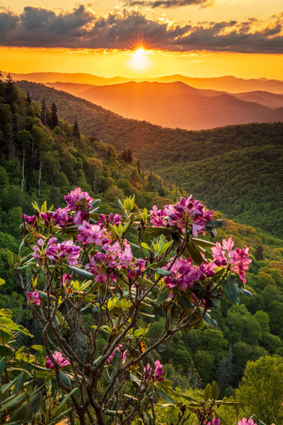 East Fork Rhodies Art | Red Rock Photography