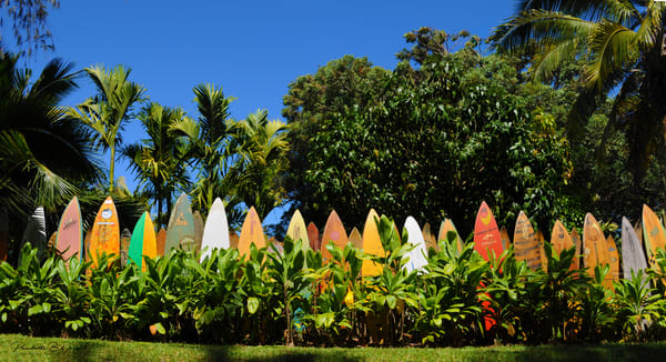 Have You Ever Seen a Fence Made of Surfboards?  Here it is! So Pretty with a Background of Tall Trees!